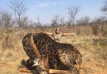 Mulher matou girafa e causou indignação