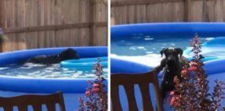 reação hilariante ao ser apanhado na piscina