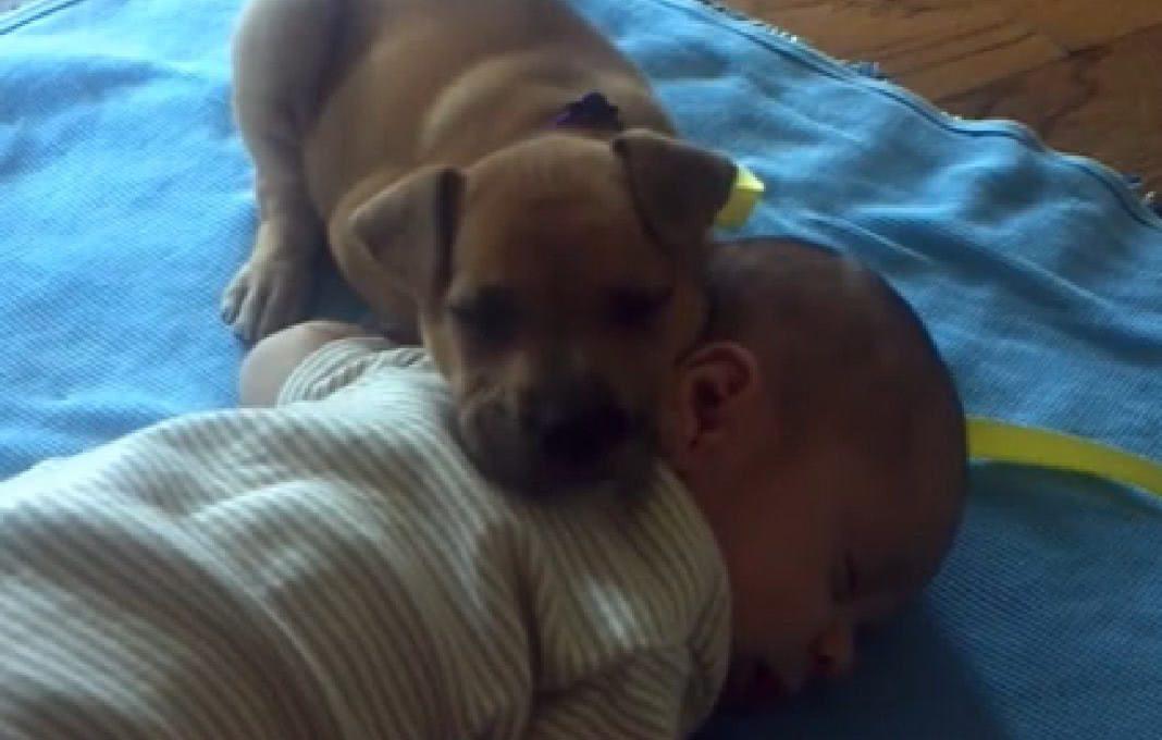 Cãozinho aninhou-se num bebé