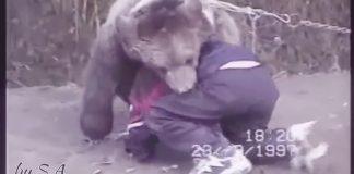 luta com um urso
