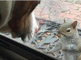 8 anos depois família percebe o que este esquilo lhes queria mostrar