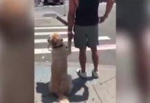 Cão atravessa a rua