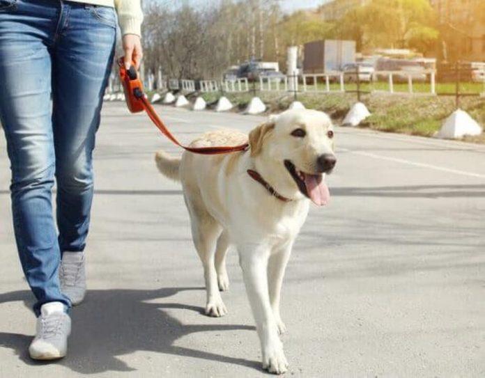pessoas para cuidar e passear animais
