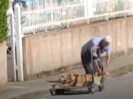 passeia o cão paralítico