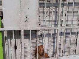 Cão é colocado num espaço exiguo