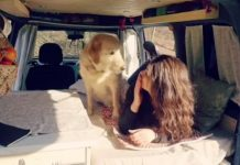 Cão de estimação sabe quando a dona terá ataque de pânico