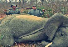 dois bebés elefantes