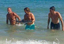 Golfinho morre depois de turistas o arrancarem do oceano