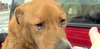 Cão abandonado pelos donos