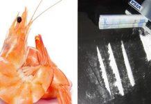 cocaína dentro de camarões