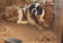 Associação salva cadela presa