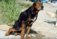 Cão arrastou-se KM