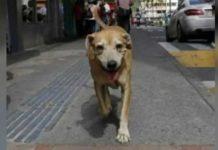 Cão desloca-se todos os dias ao hospital