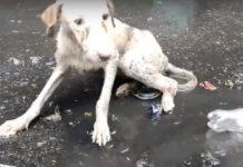 cão uivou numa poça