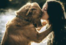Amor entre cão e dono
