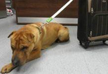 Cão abandonado na estação de comboios