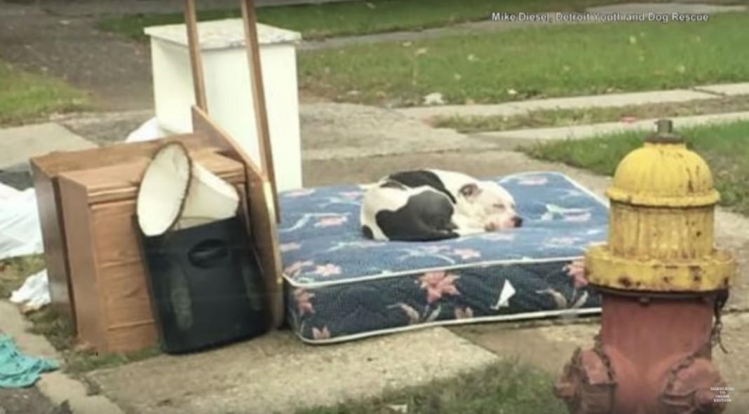 Cão deitou-se no velho colchão