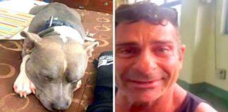 Cão roubado foi encontrado