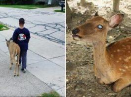 Menino ajuda um cervo cego