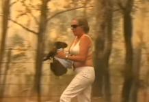 salvar coala de um incêndio