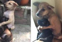 Cães abandonados ficam abraçados