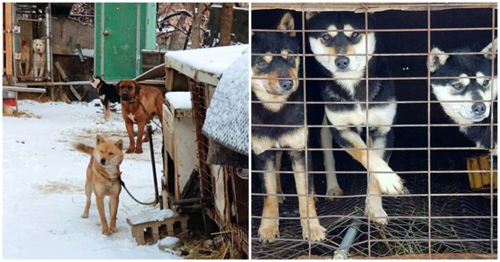 Esquiador olímpico salva 90 cães