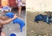 pintar cão com tinta azul.