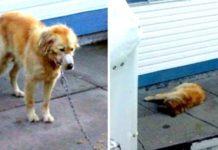 Vizinhos invadem quintal para resgatar cão
