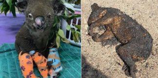 animais mortos na Austrália