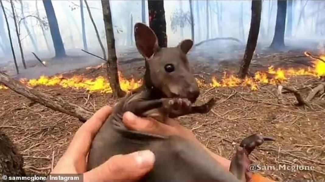 Bombeiro salva canguru bebé