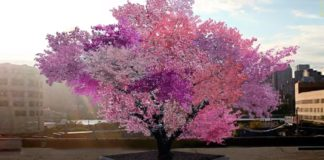 Homem cria árvore híbrida