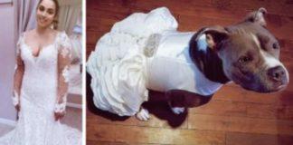 Noiva confecciona vestido para a sua cadela