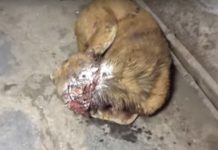 Equipa de resgate salva cão moribundo