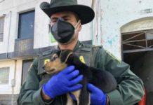 Animais não transmitem coronavírus