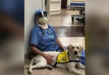 Cão de terapia conforta médicos