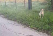 Cão encontrado abandonado