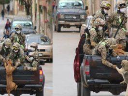 Cães abandonados perseguem carro de militares