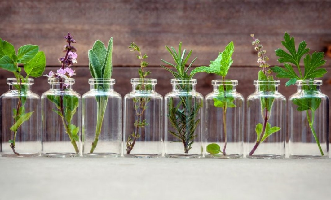 8 ervas aromáticas