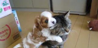 cao-bebe-nao-larga-orelha-do-gato