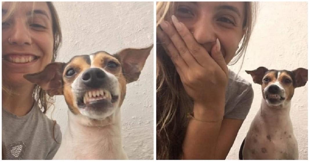 Cadelinha do canil sorri tirar selfie