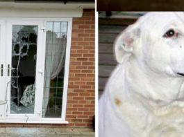 Cão parte a porta de casa