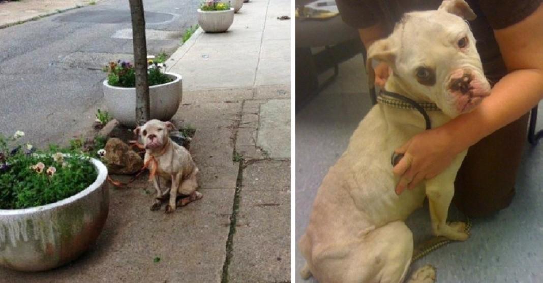 Carteiro salva cão ferido