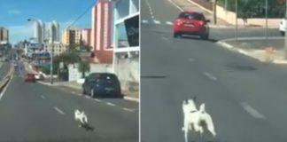 Homem abandona cão sem arrependimento