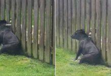 massagem do cachorrinho do vizinho
