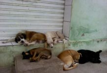 vida animais abandonados