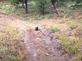Cão corre até à estrada