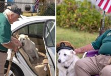 Idoso adota cãozinho velhote
