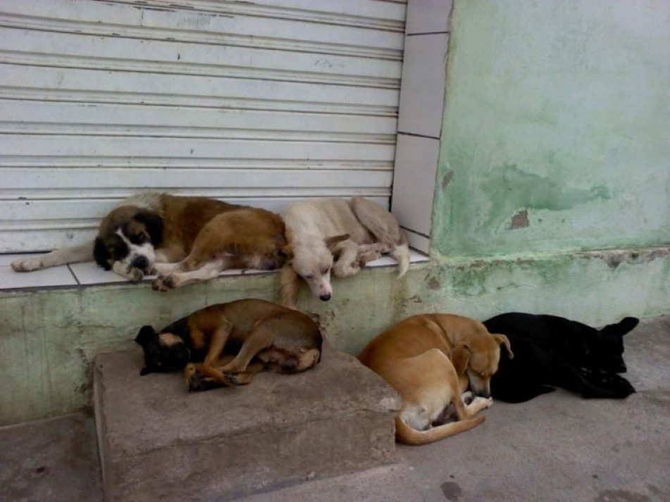 Câmara colocada em cão de rua