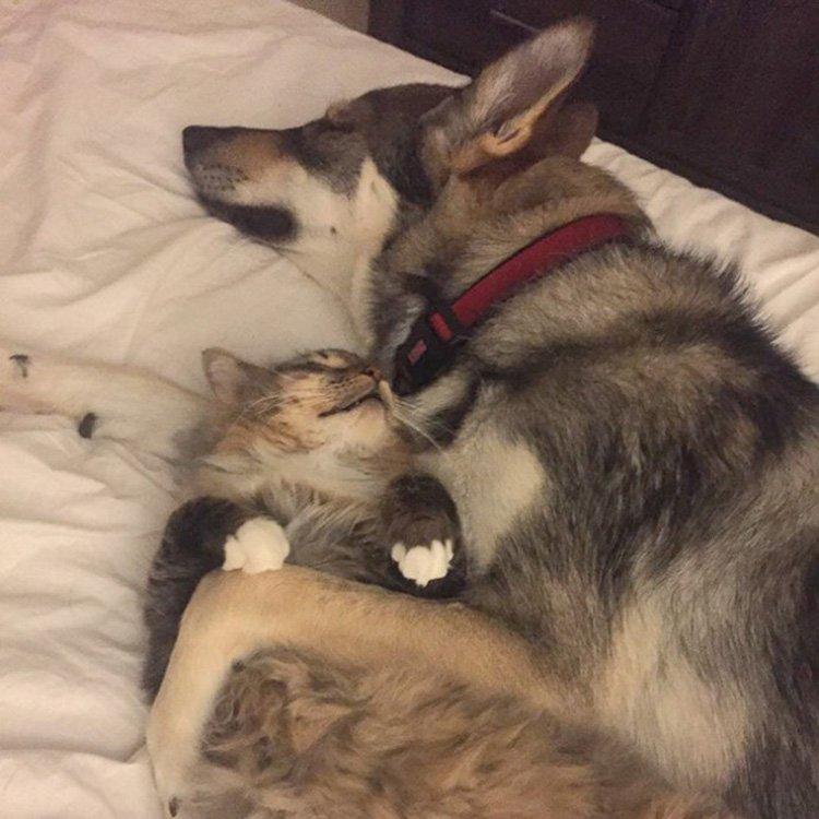 Cão é levado a um abrigo