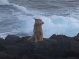 Cão esperou um ano sentado